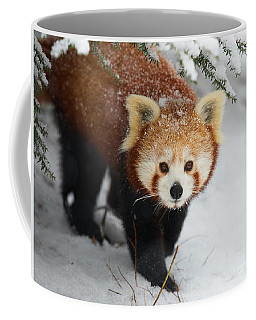 Coffee Mug featuring the photograph Red Panda In The Snow by Nick  Biemans