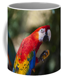 Red Parrot  Coffee Mug