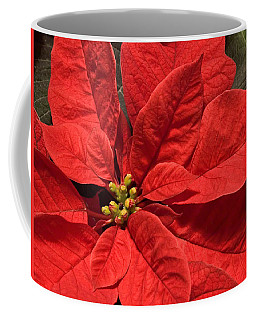 Red Poinsettia Plant For Christmas Coffee Mug by Jane McIlroy