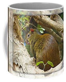 Red-rumped Agouti Coffee Mug