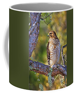 Coffee Mug featuring the photograph Red Shouldered Hawk by Beth Sargent