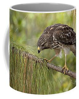 Red Shouldered Hawk Photo Coffee Mug