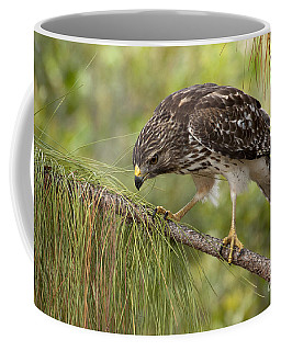 Coffee Mug featuring the photograph Red Shouldered Hawk Photo by Meg Rousher