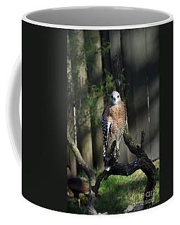 Red Shouldered-hawk Coffee Mug