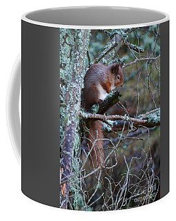 Red Squirrel On Pine Tree Coffee Mug