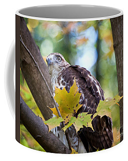 Coffee Mug featuring the photograph Red Tail Hawk Closeup by Eleanor Abramson