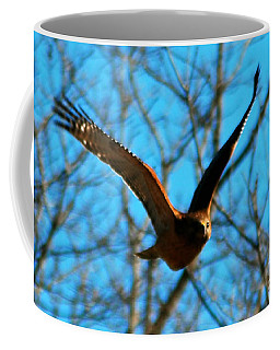 Coffee Mug featuring the photograph Red Tail Hawk In Flight by Peggy Franz