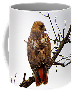 Red Tail Hawk In Winter Coffee Mug