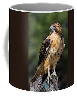 Red Tail Hawk Portrait Coffee Mug by Dale Kincaid
