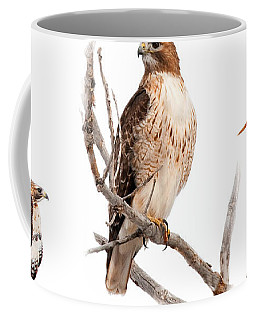 Red Tail Hawk Series Coffee Mug