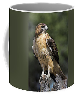 Red Tailed Hawk Coffee Mug by Dale Kincaid