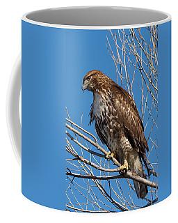Red-tailed Hawk Watching The Ducks Coffee Mug