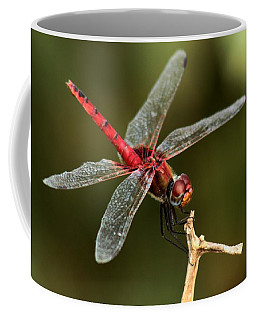 Red-veined Darter  - My Joystick Coffee Mug