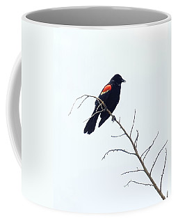 Red-winged Blackbird Coffee Mug by Paul  Wilford