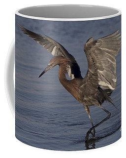Reddish Egret Fishing Coffee Mug by Meg Rousher