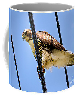 Redtailed Hawk Coffee Mug