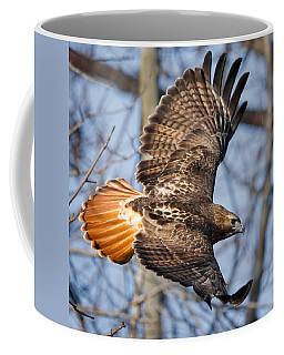 Redtail Hawk Square Coffee Mug