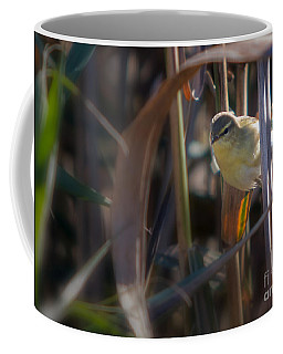 Reed Warbler Coffee Mug