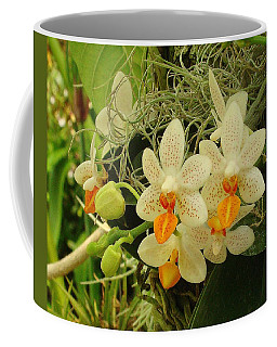 Renewal Coffee Mug