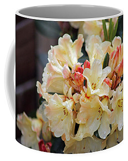 Rhododendron Nancy Evans Coffee Mug