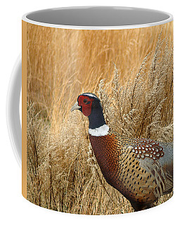 Ringneck Pheasant  Coffee Mug