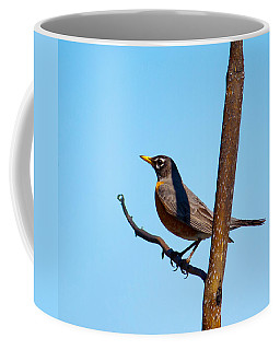 Robin Taking A Break Coffee Mug