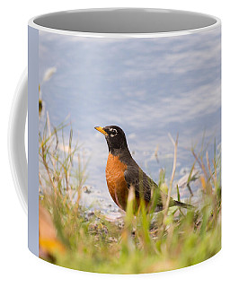 Coffee Mug featuring the photograph Robin Viewing Surroundings by John M Bailey