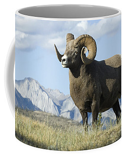 Rocky Mountain Big Horn Sheep Coffee Mug
