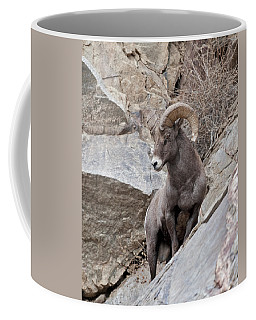 Rocky Mountain Big Horn Sheep Ram Coffee Mug