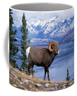 Rocky Mountain Bighorn Ovis Canadensis Coffee Mug