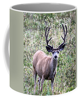Rocky Mountain Buck Coffee Mug