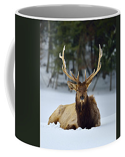 Rocky Mountain Elk Coffee Mug