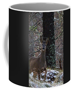 Roe Deer - Surprise Encounter Coffee Mug