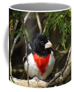 Rose Breasted Grosbeak Perched Coffee Mug