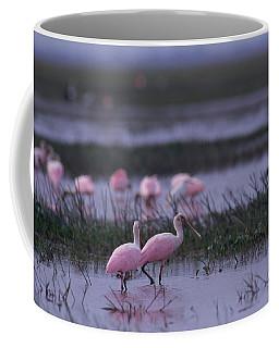 Roseate Spoonbill, Venezuela, South Coffee Mug