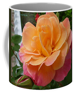 Coffee Mug featuring the photograph Rosemary And Thyme by Lingfai Leung