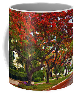 Royal Poinciana Trees Blooming In South Florida Coffee Mug