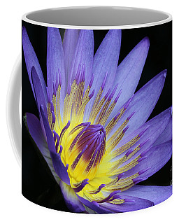 Royal Purple Water Lily #14 Coffee Mug