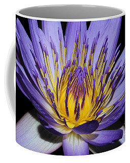 Royal Purple Water Lily #5 Coffee Mug by Judy Whitton