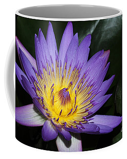 Royal Purple Water Lily #6 Coffee Mug