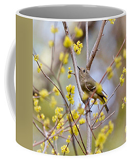 Coffee Mug featuring the photograph Ruby-crowned Kinglet by Kerri Farley