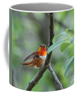 Rufus Hummingbird Coffee Mug