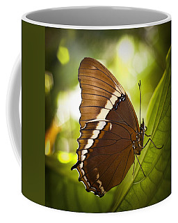 Coffee Mug featuring the photograph Rusty Tip Butterfly by Bradley R Youngberg