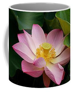 Sacred Lotus Coffee Mug
