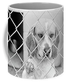 Sad Beagle Dog Looking Through Chain Coffee Mug