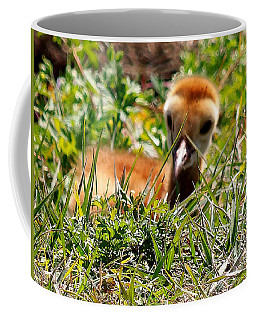 Coffee Mug featuring the photograph Sandhill Chick 005 by Chris Mercer