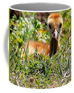 Coffee Mug featuring the photograph Sandhill Chick 006 by Chris Mercer