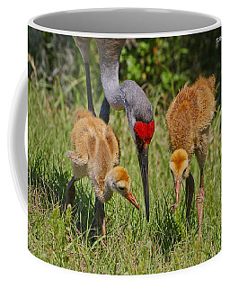 Sandhill Crane Family Feeding Coffee Mug