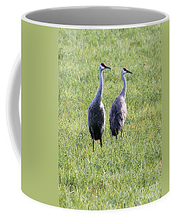 Coffee Mug featuring the photograph Sandhill Cranes In Wisconsin by Debbie Hart