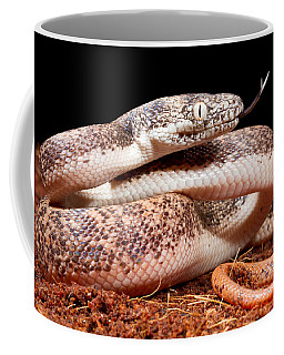 Savu Python In Defensive Posture Coffee Mug